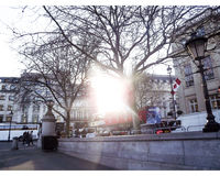 Парк Treeline стоковая фотография rf