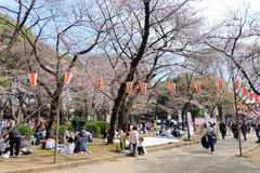 Парк Ueno во время сезона вишневого цвета Стоковые Фотографии RF