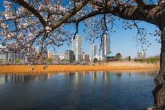 Парк Ueno Стоковое Изображение