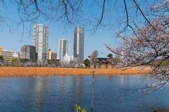 Парк Ueno Стоковые Фотографии RF