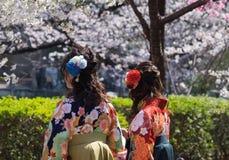 Парк Ueno Стоковые Изображения RF