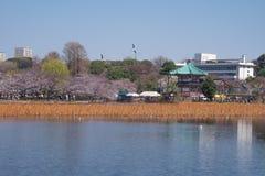 Парк Ueno Стоковое Фото