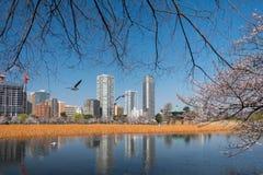 Парк Ueno Стоковые Фото