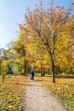 Парк Vorontsov Futumn moscow Стоковые Изображения