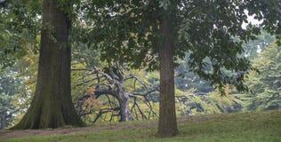 парк york главного города новый Стоковое Изображение