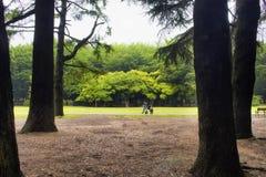 Парк Yoyogi в токио Стоковое Изображение