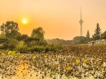 Парк Yuyuantan стоковая фотография rf