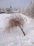 Парк Zhovtneviy на зим-Украине Chernivtsi Стоковая Фотография