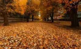 Парк Zugazarte в осени с лист стоковые фотографии rf