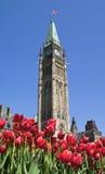 парламент скачет стоковые изображения rf