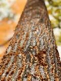 Парма домашняя к самым новым Кливленд MetroParks которые заполнены с удивительной природой - ПАРМОЙ - ОГАЙО стоковые изображения rf