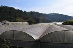 Парники в долине соснового леса в Dalat, Вьетнаме Стоковое Фото