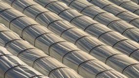 Парники тоннеля для интенсивного сельского хозяйства Стоковые Фото