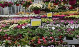 Парник весной с ценами цветковых растений для продажи Стоковое Изображение