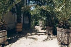 Парник в ботаническом саде ладони и деревья зеленых растений на Стоковое Изображение