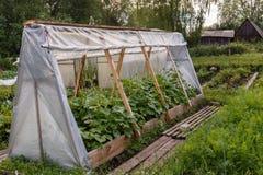 Парник для огурцов в саде Стоковое Изображение
