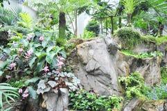 парник сада тропический Стоковые Фотографии RF