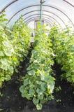 Парник сада Стоковая Фотография RF