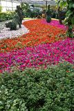 парник цветка Стоковое Фото