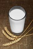 парное молоко Стоковое Изображение RF