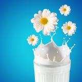 Парное молоко в стекле Стоковое Изображение RF