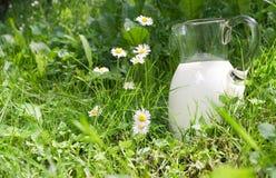парное молоко Стоковая Фотография