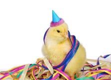 партия господина цыпленока стоковая фотография rf