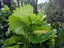 Партия завода в зеленом цвете сада стоковое фото rf