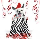 партия собаки рождества Стоковые Фото