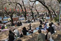 Партия hanami Японии Стоковые Изображения