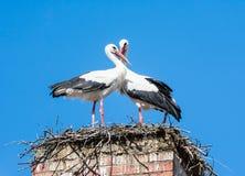 Пары белого аиста в их гнезде на печной трубе Стоковое Изображение