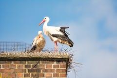 Пары белого аиста в их гнезде на печной трубе Стоковое Фото
