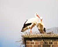 Пары белого аиста в их гнезде на печной трубе Стоковые Фото