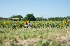 Пары в влюбленности в поле солнцецветов стоковая фотография rf