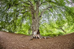 Пары говоря под большим деревом стоковые фотографии rf