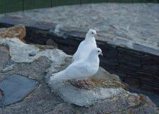Пары голубя церков Stepantsminda Gergeti белые стоковая фотография