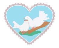 Пары голубей белизны sweety Иллюстрация штока
