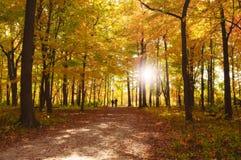 Пары гуляя через парк осени Стоковые Изображения RF