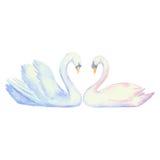 Пары лебедей иллюстрация вектора
