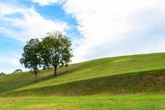 Пары дерева на поле с голубым небом Стоковые Фотографии RF