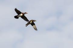 Пары деревянных уток летая в голубое небо Стоковые Фото