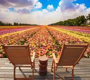 Пары деревянных loungers солнца Стоковые Фото