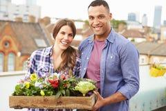 Пары держа коробку заводов на саде крыши Стоковые Изображения RF