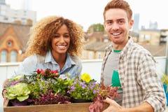 Пары держа коробку заводов на саде крыши Стоковые Фото