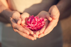 Пары держа цветок, романтичную дату Стоковые Изображения