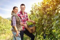 Пары жать виноградины Стоковые Изображения