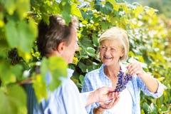 Пары жать виноградины Стоковое фото RF