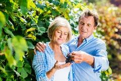 Пары жать виноградины Стоковая Фотография