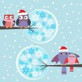 Пары зимы сычей и птиц Стоковое Изображение