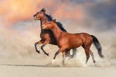 Пары игры и укуса лошади стоковое фото rf